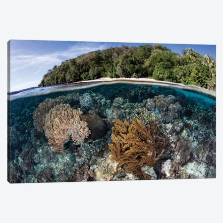 A Coral Reef Thrives In Shallow Water Near Alor In The Lesser Sunda Islands Of Indonesia Canvas Print #TRK2014} by Ethan Daniels Canvas Artwork