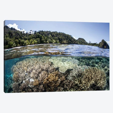 A Diverse Array Of Corals Grow In Raja Ampat, Indonesia Canvas Print #TRK2015} by Ethan Daniels Canvas Artwork
