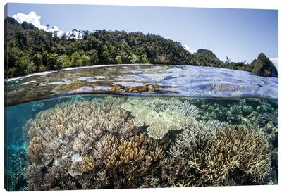 A Diverse Array Of Corals Grow In Raja Ampat, Indonesia Canvas Art Print