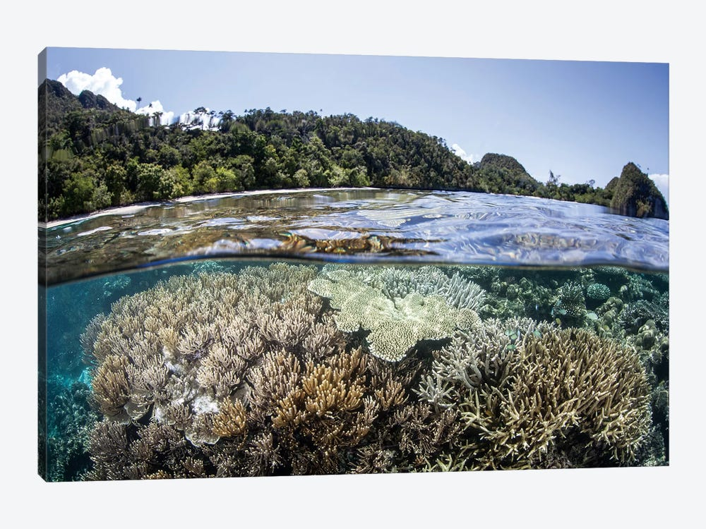A Diverse Array Of Corals Grow In Raja Ampat, Indonesia by Ethan Daniels 1-piece Canvas Print
