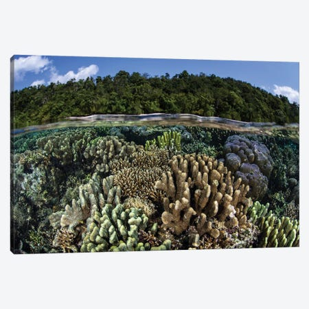 A Diverse Array Of Reef-Building Corals In Raja Ampat, Indonesia I Canvas Print #TRK2016} by Ethan Daniels Canvas Artwork