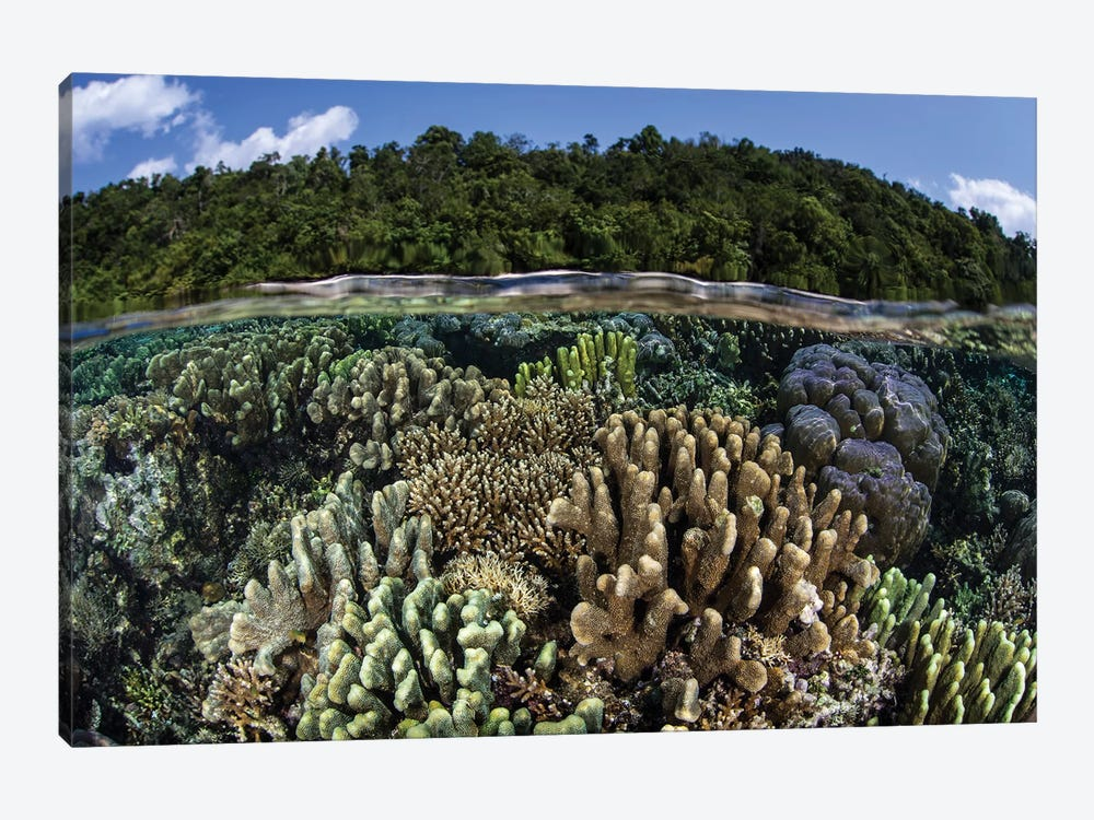 A Diverse Array Of Reef-Building Corals In Raja Ampat, Indonesia I by Ethan Daniels 1-piece Canvas Art
