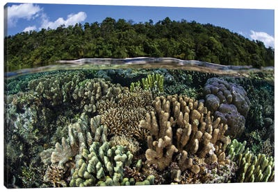 A Diverse Array Of Reef-Building Corals In Raja Ampat, Indonesia I Canvas Art Print