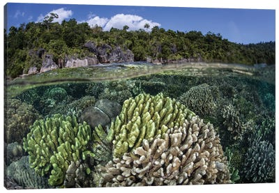 A Diverse Array Of Reef-Building Corals In Raja Ampat, Indonesia II Canvas Art Print