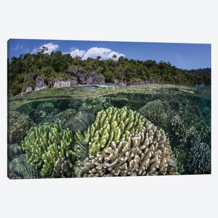 A Diverse Array Of Reef-Building Corals In Raja Ampat, Indonesia II Canvas Print #TRK2017} by Ethan Daniels Canvas Art