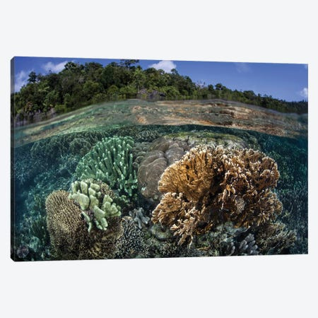 A Diverse Array Of Reef-Building Corals In Raja Ampat, Indonesia III Canvas Print #TRK2018} by Ethan Daniels Canvas Print