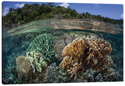 A Diverse Array Of Reef-Building Corals In Raja Ampat, Indonesia III Canvas Art Print