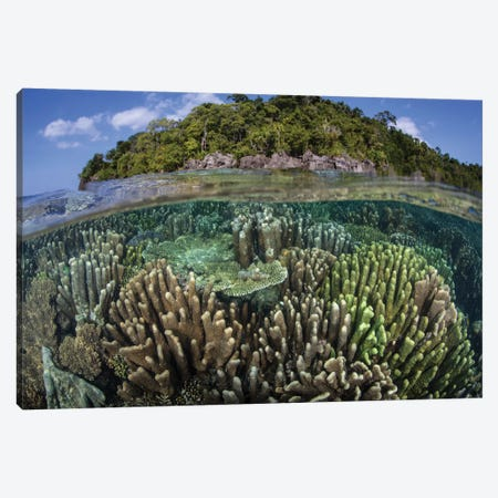 A Diverse Array Of Reef-Building Corals In Raja Ampat, Indonesia IV Canvas Print #TRK2019} by Ethan Daniels Canvas Art Print