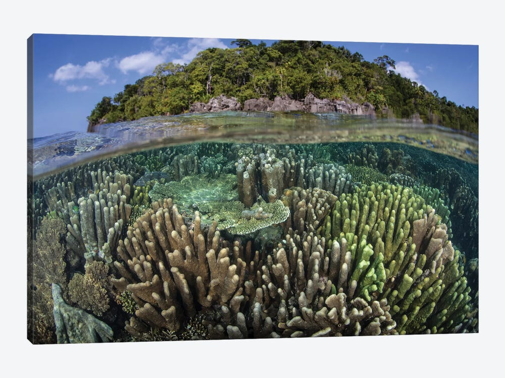 A Diverse Array Of Reef-Building Corals In Raja Ampat, Indonesia IV by Ethan Daniels 1-piece Canvas Print