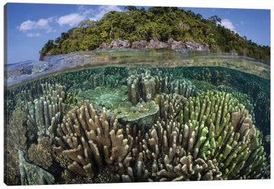 A Diverse Array Of Reef-Building Corals In Raja Ampat, Indonesia IV Canvas Art Print