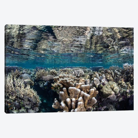 A Diverse Coral Reef Grows In Shallow Water In The Solomon Islands I Canvas Print #TRK2020} by Ethan Daniels Canvas Wall Art