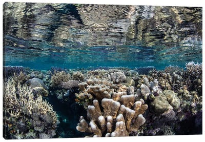 A Diverse Coral Reef Grows In Shallow Water In The Solomon Islands I Canvas Art Print