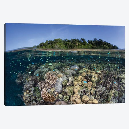 A Diverse Coral Reef Grows In Shallow Water In The Solomon Islands II Canvas Print #TRK2021} by Ethan Daniels Canvas Art