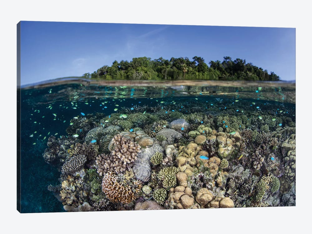 A Diverse Coral Reef Grows In Shallow Water In The Solomon Islands II by Ethan Daniels 1-piece Canvas Wall Art