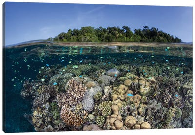 A Diverse Coral Reef Grows In Shallow Water In The Solomon Islands II Canvas Art Print