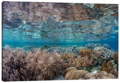 A Healthy And Diverse Coral Reef Grows In Raja Ampat, Indonesia Canvas Art Print