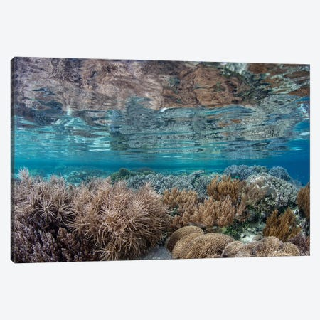 A Healthy And Diverse Coral Reef Grows In Raja Ampat, Indonesia Canvas Print #TRK2023} by Ethan Daniels Canvas Artwork