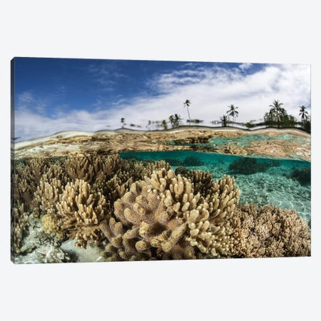 A Healthy Coral Reef Grows In The Solomon Islands I Canvas Print #TRK2024} by Ethan Daniels Canvas Art Print