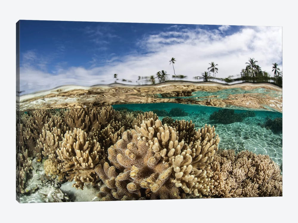 A Healthy Coral Reef Grows In The Solomon Islands I by Ethan Daniels 1-piece Canvas Print