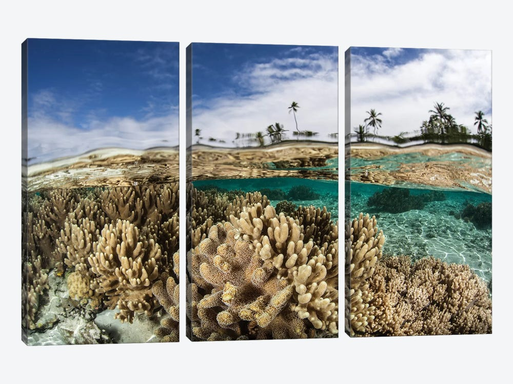 A Healthy Coral Reef Grows In The Solomon Islands I by Ethan Daniels 3-piece Canvas Print
