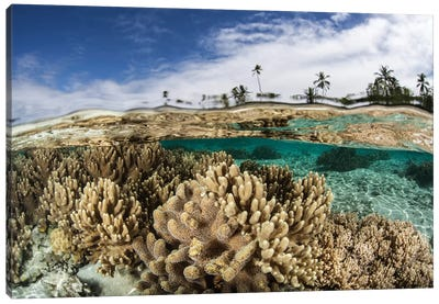 A Healthy Coral Reef Grows In The Solomon Islands I Canvas Art Print