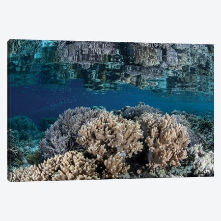 A Healthy Coral Reef Grows In The Solomon Islands II Canvas Print #TRK2025} by Ethan Daniels Canvas Art Print