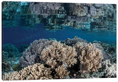 A Healthy Coral Reef Grows In The Solomon Islands II Canvas Art Print