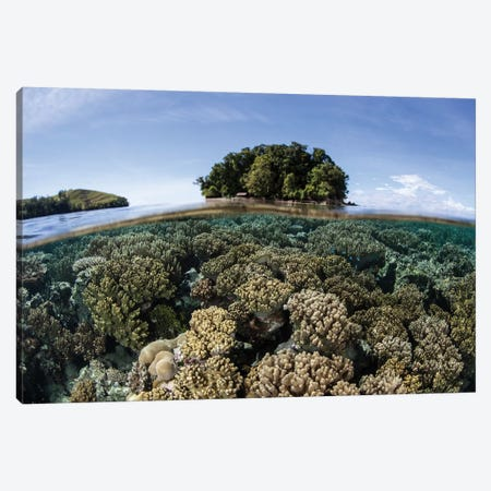 A Healthy Coral Reef Grows In The Solomon Islands III Canvas Print #TRK2026} by Ethan Daniels Canvas Print