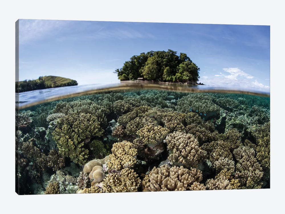 A Healthy Coral Reef Grows In The Solomon Islands III by Ethan Daniels 1-piece Canvas Print