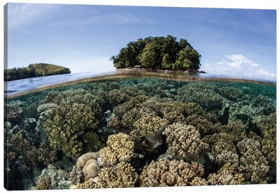 A Healthy Coral Reef Grows In The Solomon Islands III Canvas Art Print