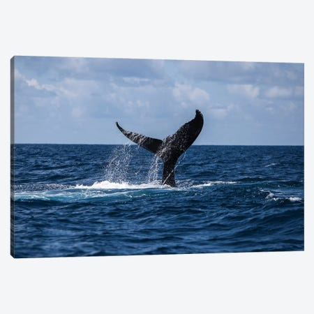 A Humpback Whale Slaps Its Tail On The Surface Of The Atlantic Ocean Canvas Print #TRK2027} by Ethan Daniels Canvas Art Print