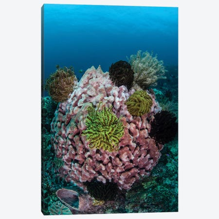A Large Barrel Sponge Covered With Crinoids Canvas Print #TRK2031} by Ethan Daniels Art Print