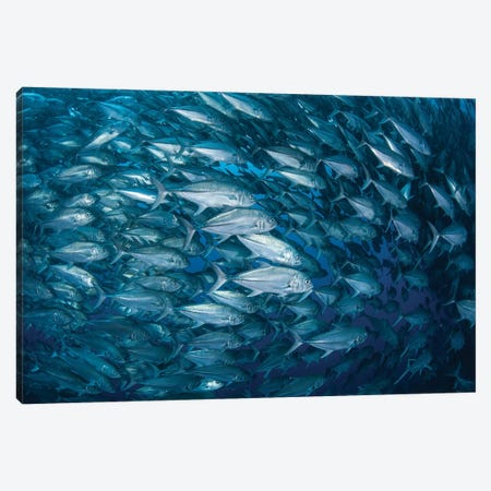 A Massive School Of Bigeye Trevally Near Cocos Island, Costa Rica Canvas Print #TRK2036} by Ethan Daniels Canvas Art