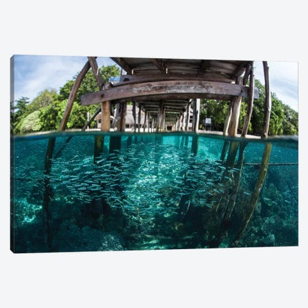 A School Of Silversides Beneath A Wooden Jetty In Raja Ampat, Indonesia Canvas Print #TRK2039} by Ethan Daniels Art Print