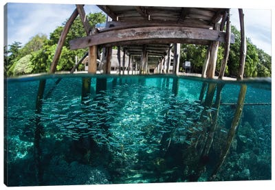 A School Of Silversides Beneath A Wooden Jetty In Raja Ampat, Indonesia Canvas Art Print