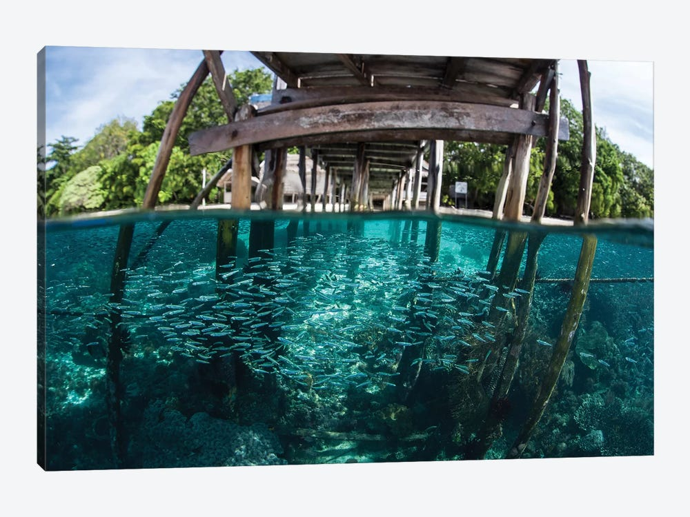 A School Of Silversides Beneath A Wooden Jetty In Raja Ampat, Indonesia by Ethan Daniels 1-piece Canvas Art Print
