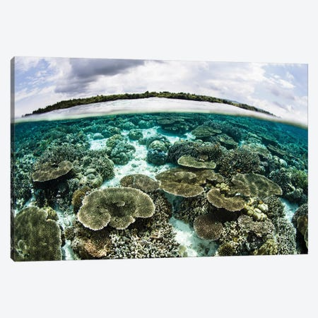 A Shallow Coral Reef Thrives In Wakatobi National Park, Indonesia Canvas Print #TRK2040} by Ethan Daniels Canvas Artwork
