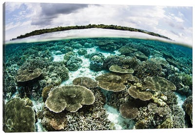 A Shallow Coral Reef Thrives In Wakatobi National Park, Indonesia Canvas Art Print