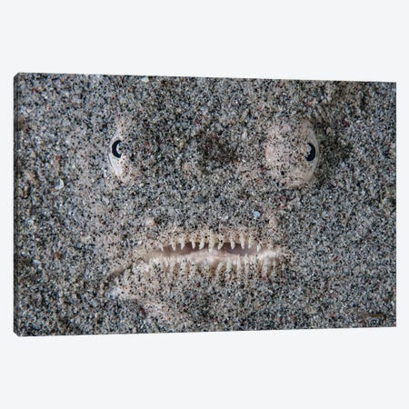 A Stargazer Fish Camouflages Itself In The Sand Canvas Print #TRK2042} by Ethan Daniels Canvas Artwork