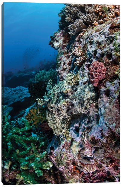 A Well-Camouflaged Crocodilefish Lies On A Coral Reef In Indonesia Canvas Art Print