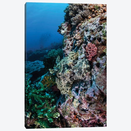 A Well-Camouflaged Crocodilefish Lies On A Coral Reef In Indonesia Canvas Print #TRK2045} by Ethan Daniels Canvas Art Print