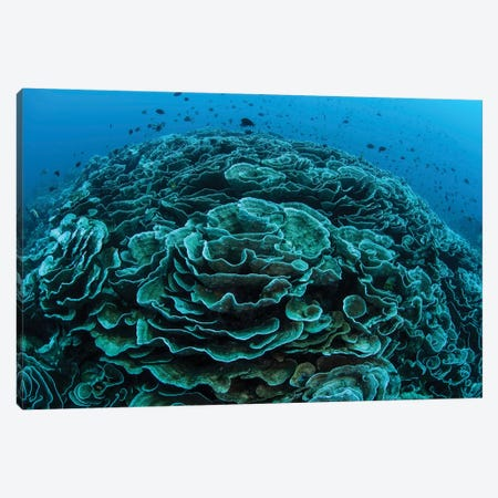Corals Are Beginning To Bleach On A Reef In Indonesia I Canvas Print #TRK2052} by Ethan Daniels Canvas Print