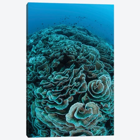 Corals Are Beginning To Bleach On A Reef In Indonesia II Canvas Print #TRK2053} by Ethan Daniels Art Print
