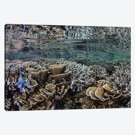 Fragile Corals Grow In Shallow Water In Komodo National Park I Canvas Print #TRK2064} by Ethan Daniels Canvas Art Print