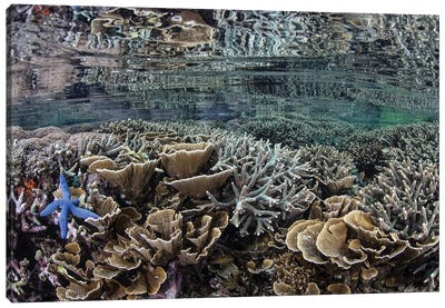 Fragile Corals Grow In Shallow Water In Komodo National Park I Canvas Art Print