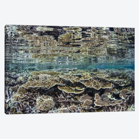 Fragile Corals Grow In Shallow Water In Komodo National Park III Canvas Print #TRK2066} by Ethan Daniels Canvas Print