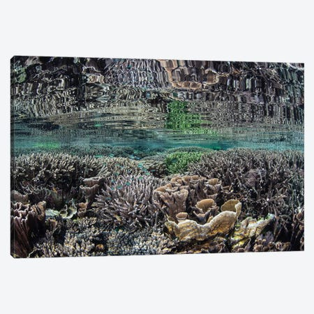 Fragile Corals Grow In Shallow Water In Komodo National Park IV Canvas Print #TRK2067} by Ethan Daniels Canvas Print
