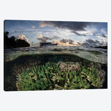 Reef-Building Corals Thrive On A Reef In The Solomon Islands Canvas Print #TRK2070} by Ethan Daniels Canvas Print