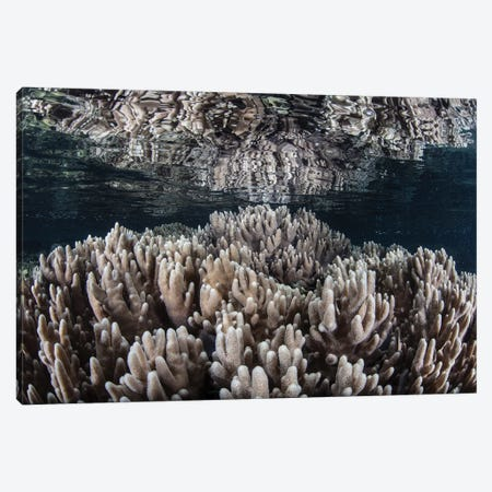 Soft Corals Grow In Shallow Water In Raja Ampat, Indonesia Canvas Print #TRK2076} by Ethan Daniels Canvas Art