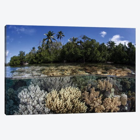 Soft Leather Corals Grow In The Shallow Waters In The Solomon Islands Canvas Print #TRK2077} by Ethan Daniels Canvas Art